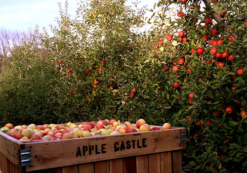 Pick-Your-Own Apples at Apple Castle for farm fresh